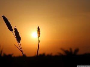 安卓风景 自然风光 大自然 黄昏 夕阳 落日余晖手机壁纸