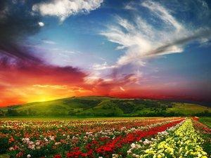 安卓风景 落日余晖 春意盎然手机壁纸