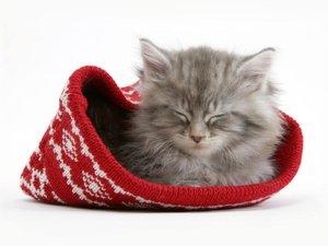 安卓萌宠 喵星人 可爱 宠物 卖萌 搞笑图 憨态百出 睡觉中手机壁纸