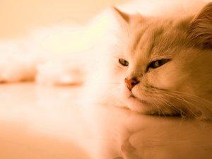 安卓萌宠 动物 可爱 萌物 宠物 喵星人 猫 儿童桌面专用手机壁纸