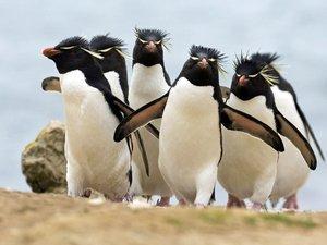 安卓萌宠 动物 可爱 萌物 野生动物 企鹅 卖萌图 极地物种 儿童桌面专用手机壁纸