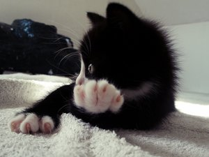 安卓萌宠 动物 可爱 萌物 宠物 喵星人 猫 古灵精怪 儿童桌面专用手机壁纸
