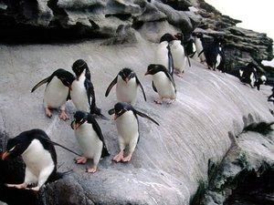 安卓极地物种 企鹅手机壁纸