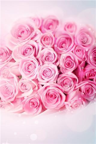 唯美玫瑰花动态壁纸下载