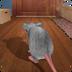 疯狂老鼠王-猫鼠之战