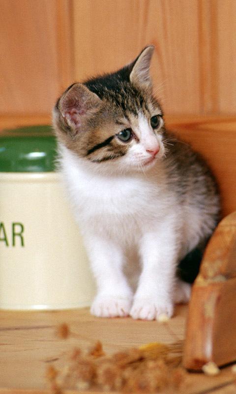 可爱猫猫高清壁纸1.0安卓客户端下载_mdpda手机网