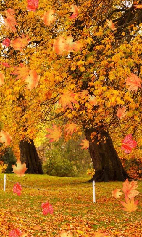 >3d秋天枫叶动态壁纸  3d秋天枫叶动态壁纸是一款高清的动态壁纸,可爱