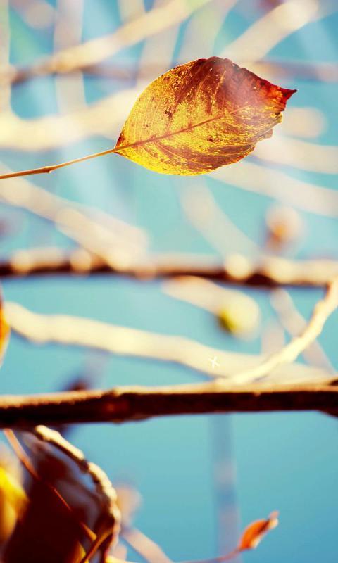 秋天的树叶-绿豆动态壁纸