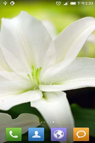 一款以清新花朵为主的动态壁纸。 在阳光的沐浴下,这些花儿给我们呈现出不一样的美。 欣赏美好的事物可以使人的心情变得轻松、愉悦,而这些美丽的花朵壁纸可以使我们在浮躁、快节奏的生活中,得到一丝平淡、平静。 多一点平静、少一点浮躁,让我们拥有这一份平静、祥和吧。 你还可以根据自己的需要,随时更换不同场景的壁纸哦。