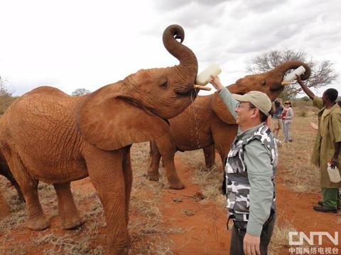 >东非野生动物大迁徙