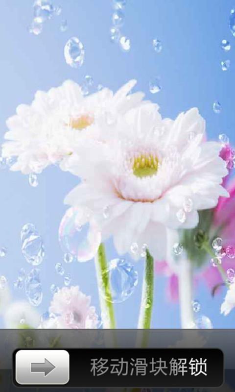 娇艳花朵风景锁屏为你提供从大自然里拍摄的各种娇艳,争相开放的花儿