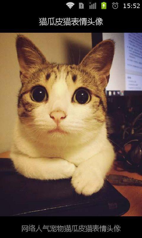 猫瓜皮猫表情头像